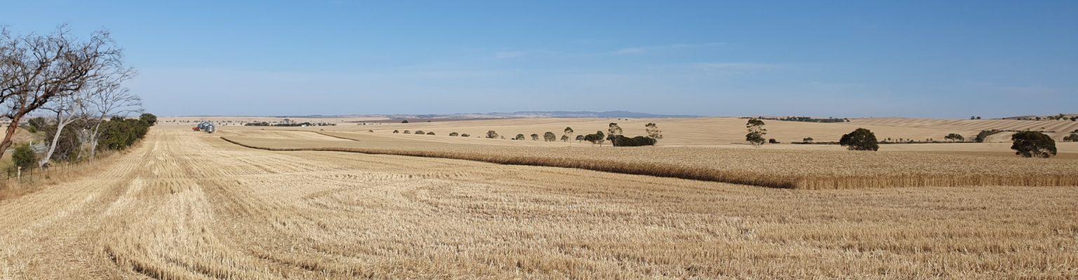 Gwyder HW Wheat Fields